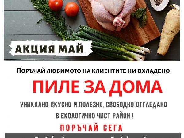 Пиле за дома