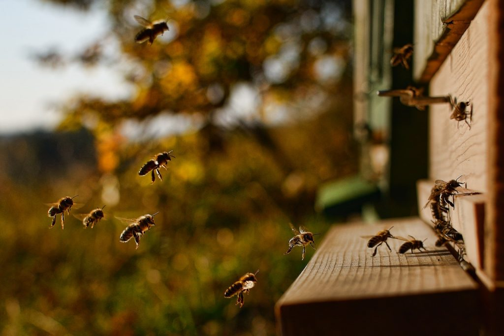 За живота на пчелите