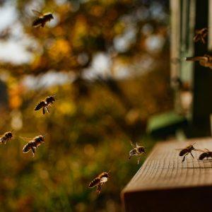 За живота на пчелите 4