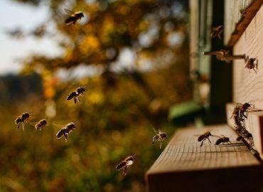 За живота на пчелите 3
