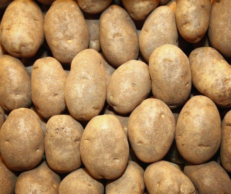 Сладък градински картоф на кг. 1